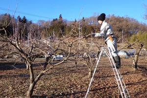 柿の剪定②2013.2.jpg