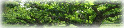 農園 栗畑1.jpg