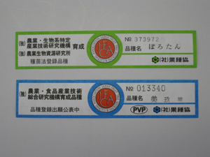 110421_koyufuda.jpg